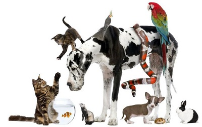 Pets and Homeopathy